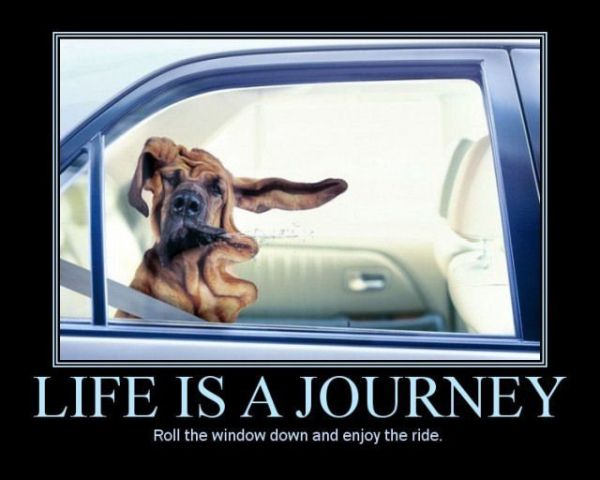 car-humor-funny-joke-road-street-drive-driver-life-is-a-journey-enjoy-ride-dog